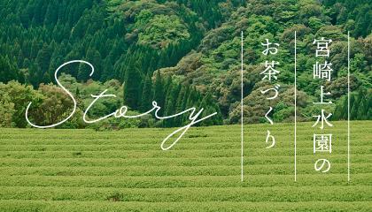 STORY 宮崎上水園のお茶づくり